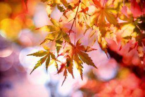 Fall into shape
